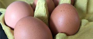 Eier Symbolbild