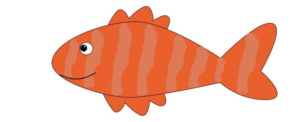 Warnung vor Verzehr von Trockenfisch (Plötze)