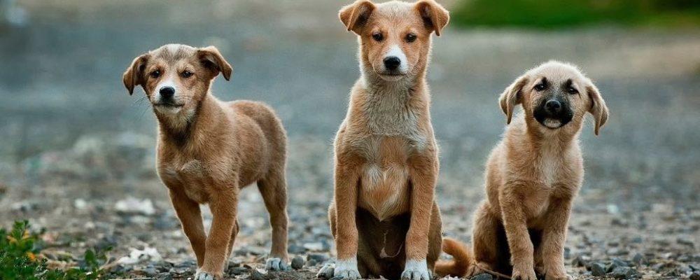 Hundebesitzer aufgepasst: Vergiftete Hunde in Berlin – stimmt das?