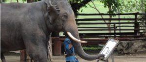 Malende Elefanten - gibts das