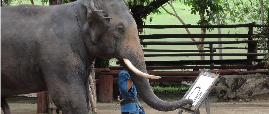 Fake Check Malende Elefanten Gibts Das Facebook Video Im Check