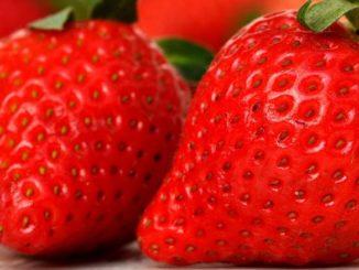 Erdbeeren Symbolbild