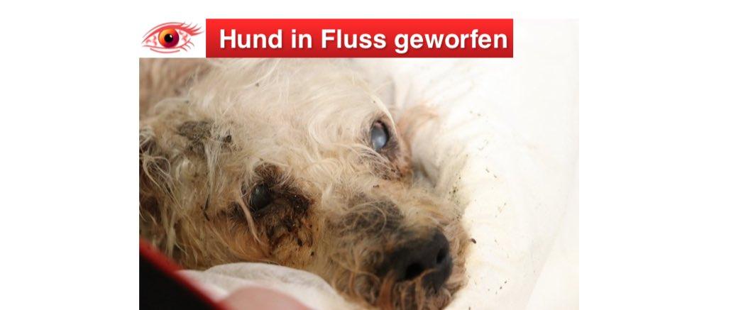2019-01-04 Zeugenaufruf Hund in Fluss geworfen