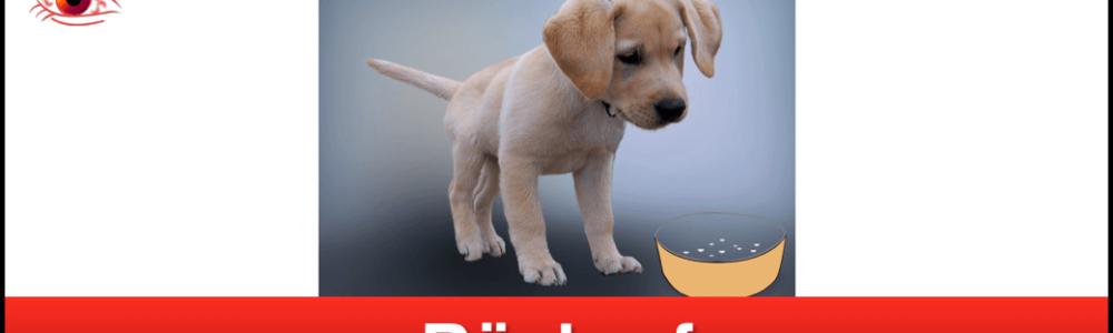 Achtung Hundebesitzer: Hill's Pet Nutrition ruft Hundefutter zurück – erhöhter Vitamin D Gehalt schadet Hunden