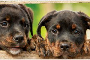 Giftköder: Daran erkennen Sie das Ihr Hund einen Giftköder gefressen hat und helfen ihm