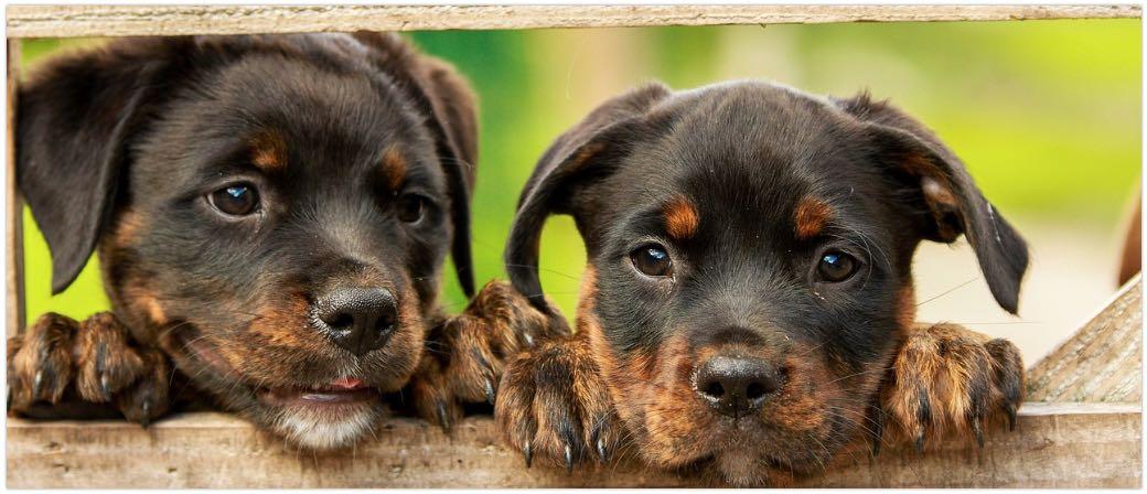 Giftköder Hunde