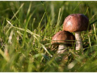 Symbolbild Pilze