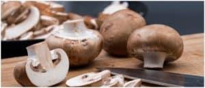 Symbolbild Pilze Champignon