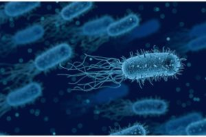 Listerien: Welche Gefahr besteht und wie können Sie sich vor den Bakterien schützen?