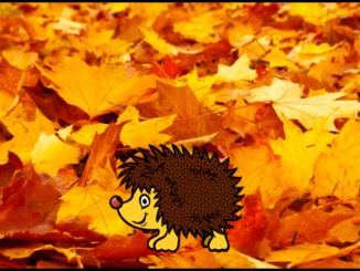 Symbolbild Herbst