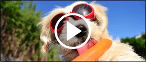 Tiere Sommer Hitze Schutz