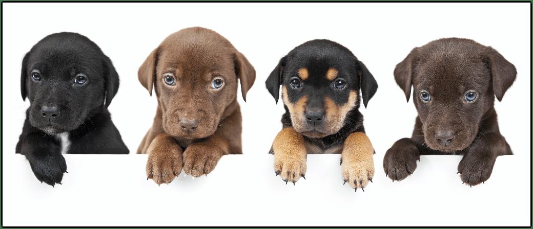 Hunde, Welpen